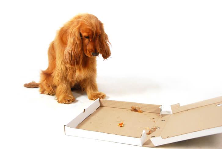 Zdjęcie rozczarowanego psa